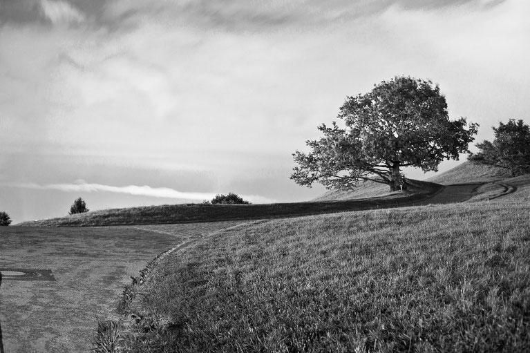Schwarz/weiß Aufnahme Baum auf einer Weide